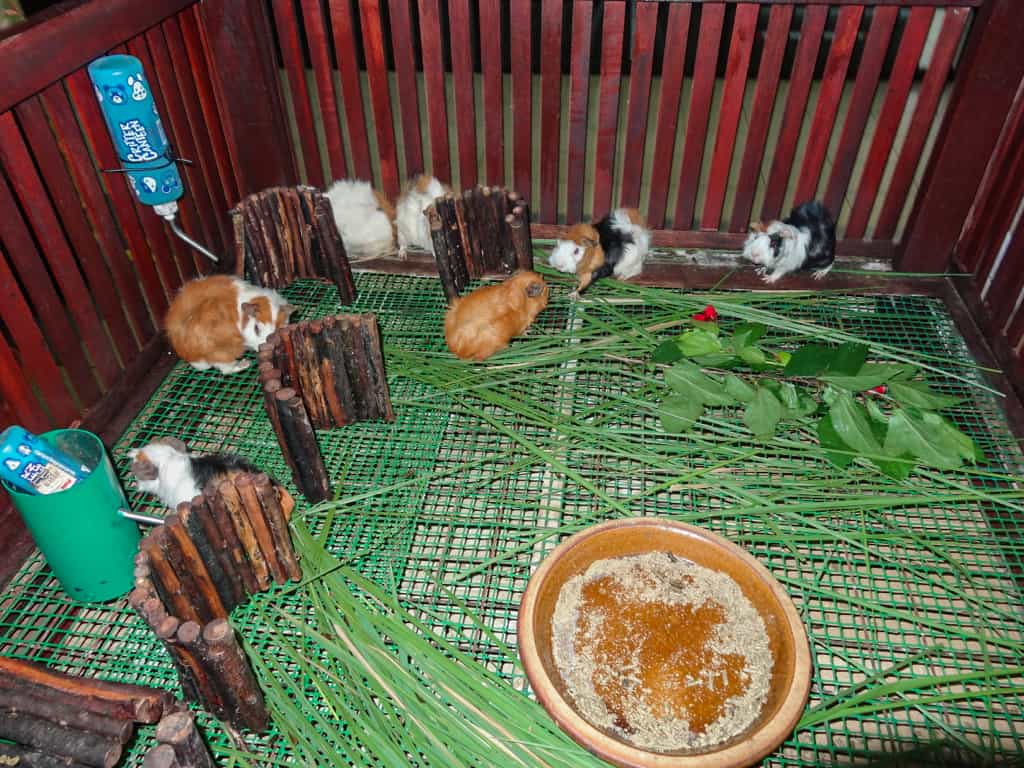 Hamsters outside the Langkawi Bird Paradise