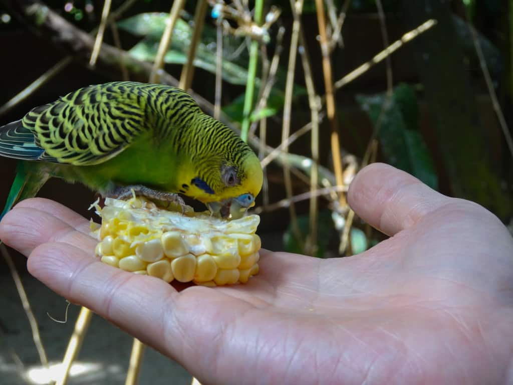 Birds eating from our hands at the Langkawi Bird Paradise