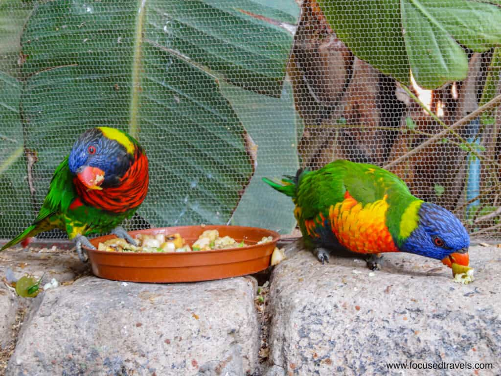 Colourful birds at the Cango Wildlife Ranch-2